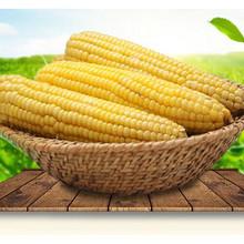 美佳绿 东北新鲜嫩黏甜玉米 2300g 26.9元包邮(31.9-5券)