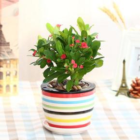 温馨满屋 室内绿植盆栽 多款可选 券后14.8元包邮