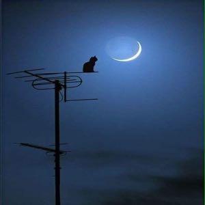 倾城月光只为你