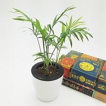 青青花木 办公室盆栽发财树 4.8元包邮(7.8-3券)
