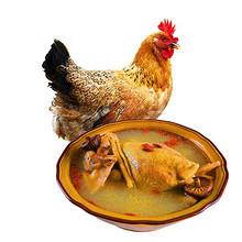 补身佳品# 荆奇 散养老母鸡土鸡 约1kg 39元包邮(89-50券)