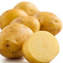 五峰印象 农家自种高山小土豆 5斤 9.9元包邮