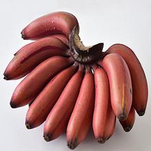 香甜软糯# 土楼特产 玫瑰蕉红皮美人蕉5斤 34.9元包邮(49.9-15券)