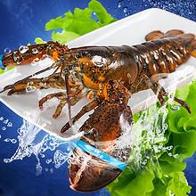 双11预售# 獐子岛波士顿鲜活龙虾700g 129元(定金20+尾款129+用券)