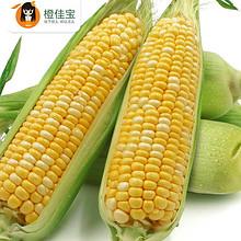 鲜嫩多汁# 农家现摘新鲜水果玉米棒8斤  39.9元包邮(49.9-10券)