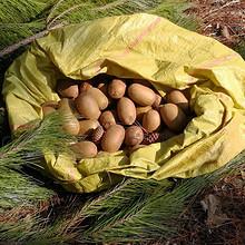 天然野生# 沃德佳 伏牛山绿心猕猴桃4斤30个 21.8元包邮(26.8-5券)