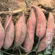 现挖新鲜红薯富硒蜜糖心地瓜5斤装 24.9元包邮(29.9-5券)