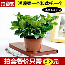 【拍套餐】办公桌美观栀子花小盆栽 5.8元包邮(9.8-2券)
