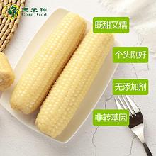 22日10点 : 东北甜糯玉米10棒(第二件9.9元) *2件 49.7元(合24.85元/件)