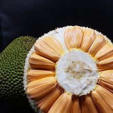 六井 海南菠萝蜜 10斤 34.8元