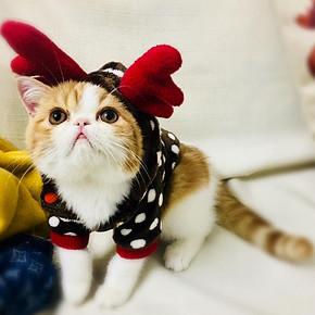 hoopet 华元宠具 猫咪冬季衣服 19.8元