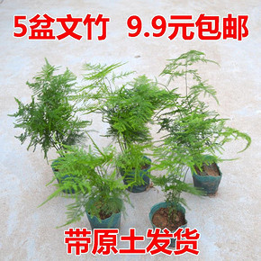 韵沃 办公室绿植文竹 10~15cm(含螺纹盆) 3.6元