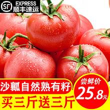 客悦鲜 攀枝花西红柿 净重约5.2斤 24.8元