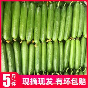 果乐兜 新鲜水果小黄瓜 5斤 28.8元