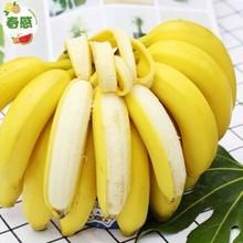 天猫 香蕉 高山野生 香甜大香蕉 10斤 19.8元包邮