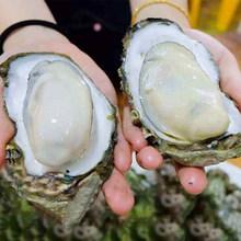 湾岛家 乳山生蚝 鲜活牡蛎5斤 券后34.9元起包邮 多规格可选