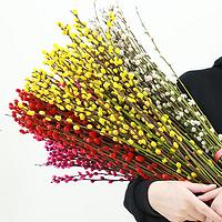 【20束】年宵花红色真花银柳花干花