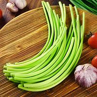 5斤装新鲜蒜苔农家自种蔬菜青菜
