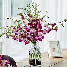 新鲜插花# 天堂鸟 洋兰家用插花花束12枝 15.8元包邮(25.8-10券)