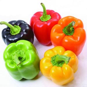 四季播种五彩甜椒种子约100粒