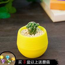 白菜价# 迷你桌面 多肉植物 含花盆套装  1.8元包邮