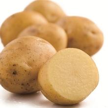 五峰印象 农家自种小土豆 5斤 18.8元包邮